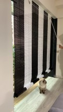 Cat loves the new blinds!
